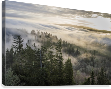 Fog and forest seen from Coxcomb Hill; Astoria, Oregon, United States of America  Canvas Print