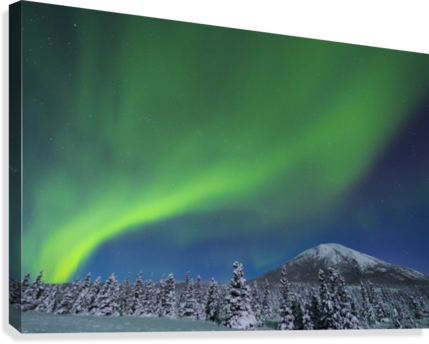 The aurora glows in the sky above Donnelly Dome and a snowy, moonlit landscape, south of Delta Junction; Alaska, United States of America  Canvas Print