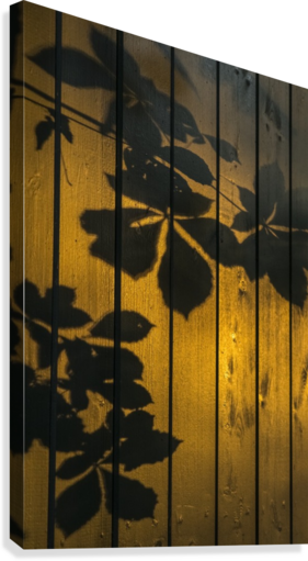 Shadows of tree branches and leaves cast on a wooden fence; Gateshead, Tyne and Wear, England  Canvas Print