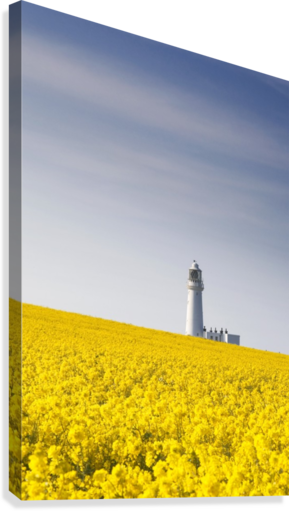 Field of yellow flowers lighthouse pacificstock canvas field of yellow flowers lighthouse canvas print mightylinksfo