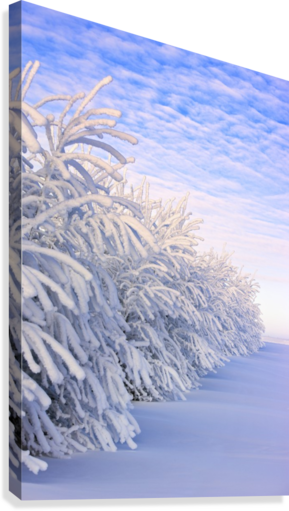 Covered In Snow  Canvas Print