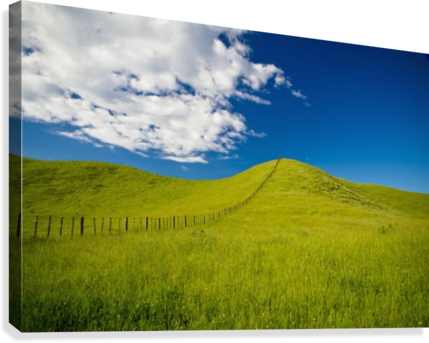 Wooden fence posts running through a grassy field new zealand wooden fence posts running through a grassy field new zealand canvas print voltagebd Images