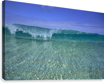 Hawaii, Front View Of Shallow Crystal Clear Aquamarine Wave, Curling A30D  Canvas Print