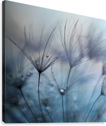 Teardrops  Canvas Print