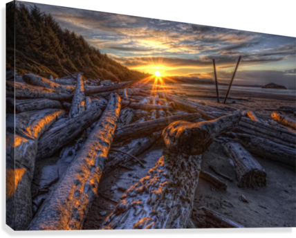 Sunrise Over The Logs At Long Beach, Pacific Rim National Park, British Columbia.  Canvas Print