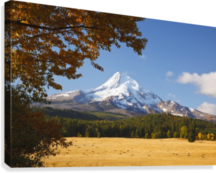 Mount Hood And Autumn Colours In Hood River Valley; Oregon, United States of America  Canvas Print