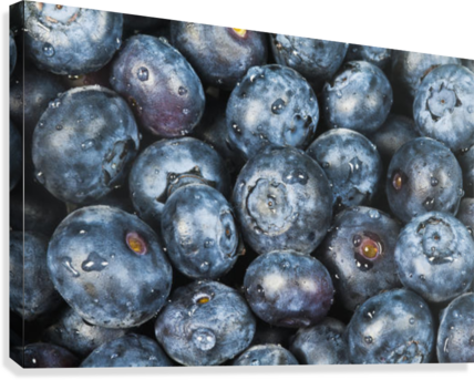 Close up shot of several fresh blueberries.  Canvas Print