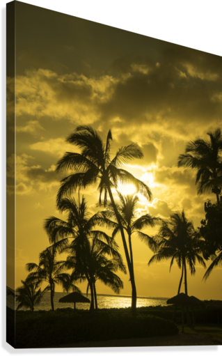 Palms and Hulu Thatched Tiki Umbrellas in the Golden Light of Sunset  Canvas Print