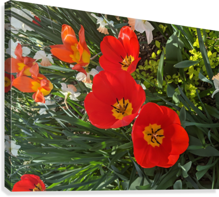 The Flower Family  Canvas Print