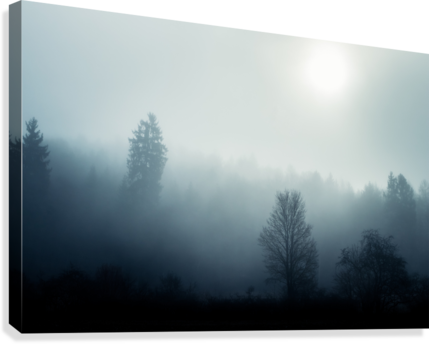 Sunrise in the misty forest  Canvas Print