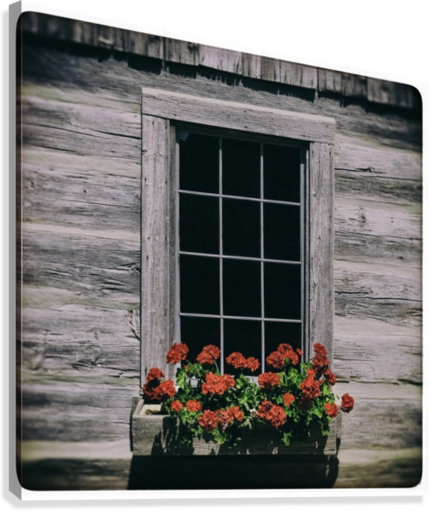 Window of Flowers  Canvas Print