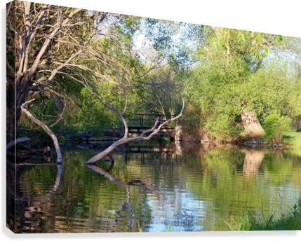 Relaxing Pond View  Canvas Print