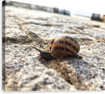 Little snail in the village of Portugal  Canvas Print