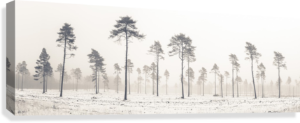 Snowy forest in winter  Canvas Print
