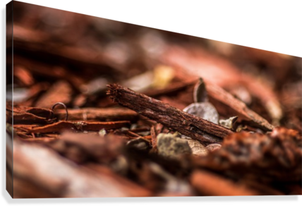 Wood Chips  Canvas Print