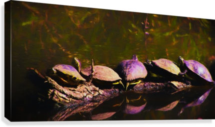 Freshwater Turtles Watercolor  Canvas Print