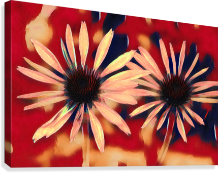 Two Coneflowers  Canvas Print