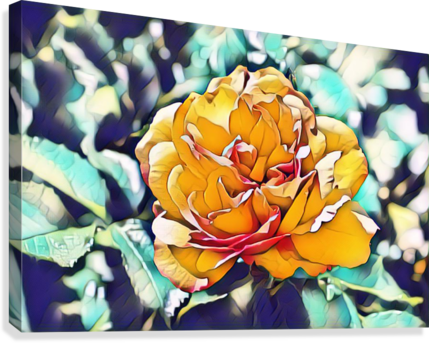 Rose in Yellow  Canvas Print