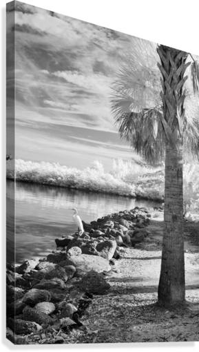 Wabasso Causeway with great white heron  Canvas Print