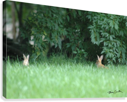 Bunnies Two  Canvas Print