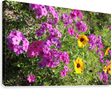 Purple and yellow wildflowers brooke front canvas purple and yellow wildflowers canvas print mightylinksfo