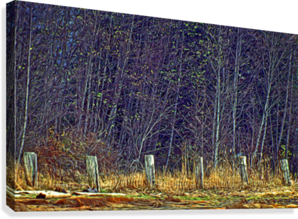 Weathered Fence Posts  Canvas Print