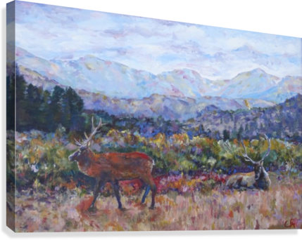 Rocky Mountain Park Elk   Canvas Print
