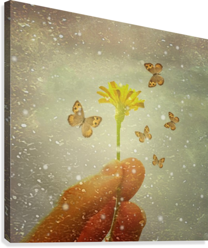 Butterflies Charmer  Canvas Print