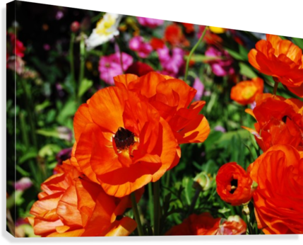 Garden with Orange Flowers Growing  Canvas Print