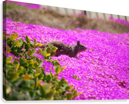 Pink wild flowers on a hill with a squirrel darryl green canvas pink wild flowers on a hill with a squirrel canvas print mightylinksfo