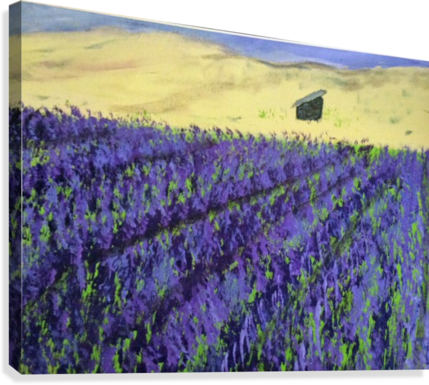 Purple Lavender fields painting  Canvas Print