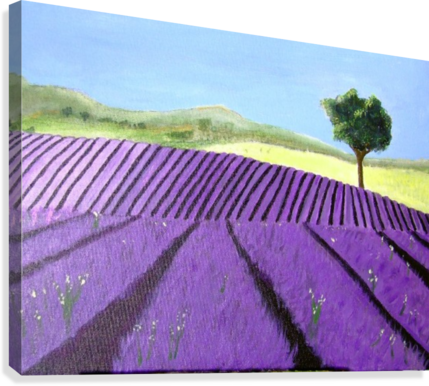 PURPLE LAVENDER FIELD PAINTING DARRYL GREEN  Canvas Print
