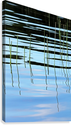 Reeds In The Shallows Abstract  Canvas Print