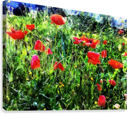 Green Pasture With Red Poppies  Canvas Print