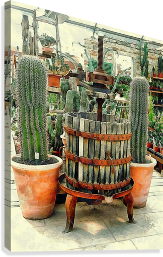 Old Wine Press Used in Succulent Display  Canvas Print