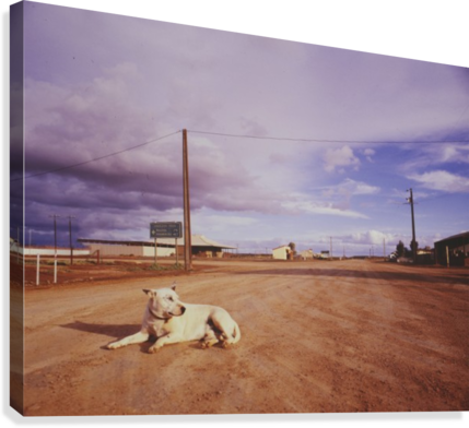Lone dog in Outback town Australia  Canvas Print
