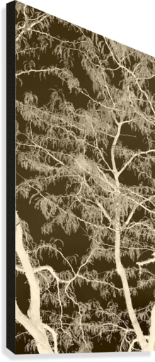 LACEY SEPIA TREE MIDDLE ELLEN BARRON O-REILLY  Canvas Print