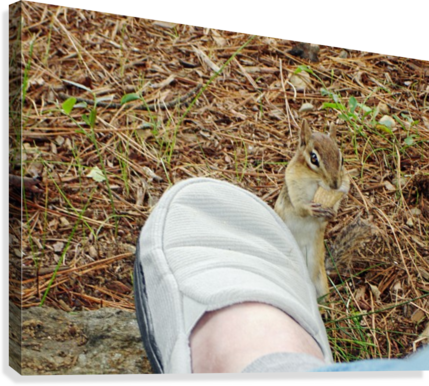 WALLY THE CHIPMUNK  - EATS  A PEANUT OFF MY SLIPPER FOXHOLLOWART  Canvas Print