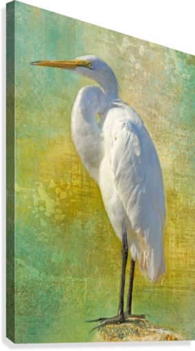 Tropical Egret  Canvas Print