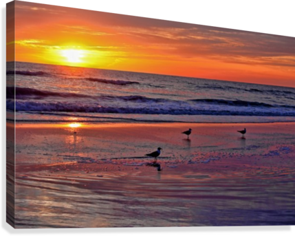 Three Seagulls On A Sunset Beach Hh Photography Of Florida
