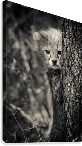 Shy but Curious  Canvas Print