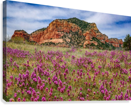 Clover Fields in Sedona  Canvas Print