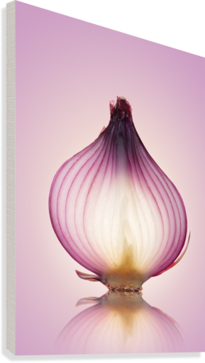 Red Onion Translucent layers  Canvas Print