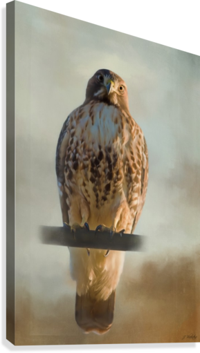 View Life - Hawk Art by Jordan Blackstone  Canvas Print