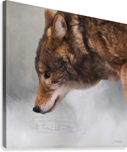 Time To Breathe - Wolf Art by Jordan Blackstone  Canvas Print