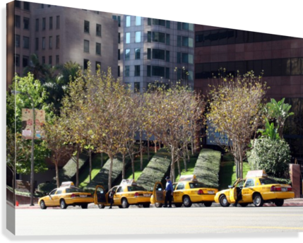 Four Taxis Four Trees  Canvas Print