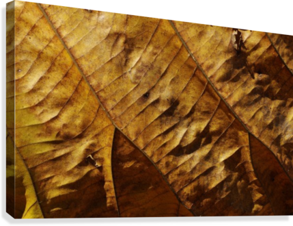 Close-up view of dried leaf  Canvas Print