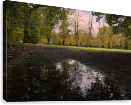 Autumn reflections in a field  Canvas Print