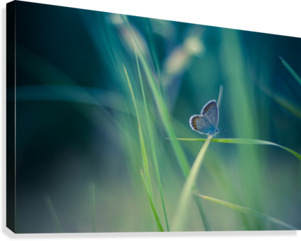 Butterfly summer background  Canvas Print