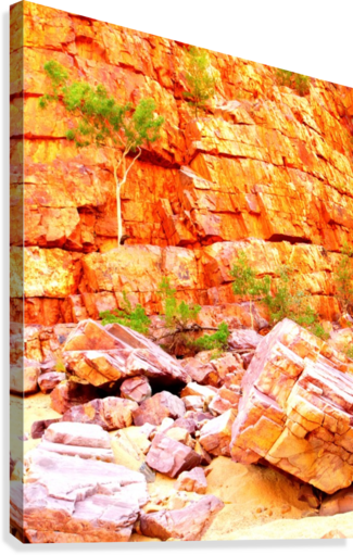 Surviving - Ormiston Gorge  Canvas Print